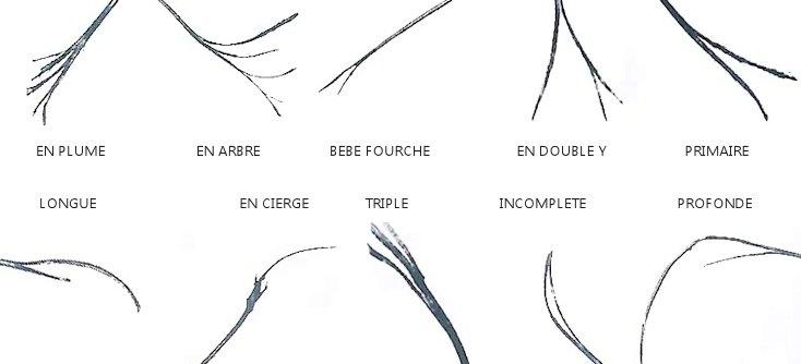 Les différents types de fourches