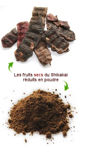 Illustration article Shikakai