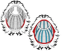 """Illustration article """"Bonnet perruque"""""""